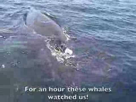 Humpback Whales People Watch in Santa Barbara