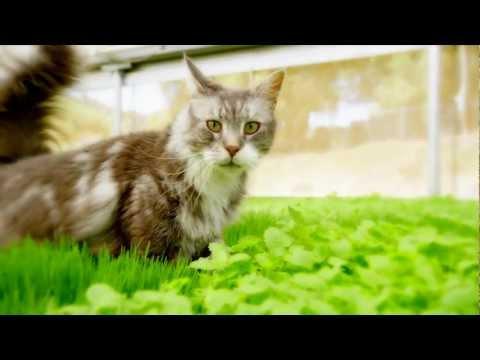 Kitty Dreams - Petco