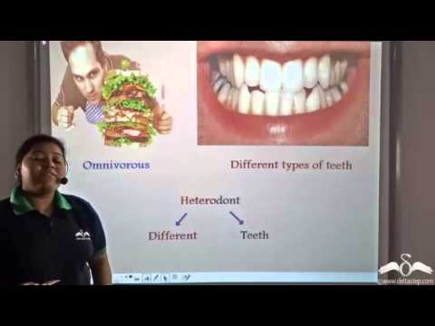 Introduction to Teeth