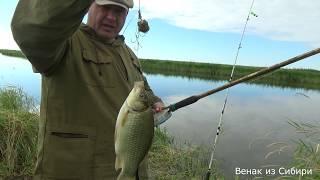 Рыбалка с Сибирским Странником, бешенный клев крупных карасей и как бонус сазанчик!