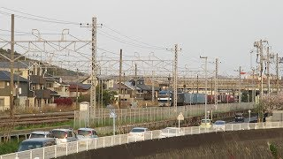 JR貨物・EF210形鎌倉道踏切から桜(Japan Freight Railway)