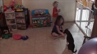 6 Year Old Training Her Dog