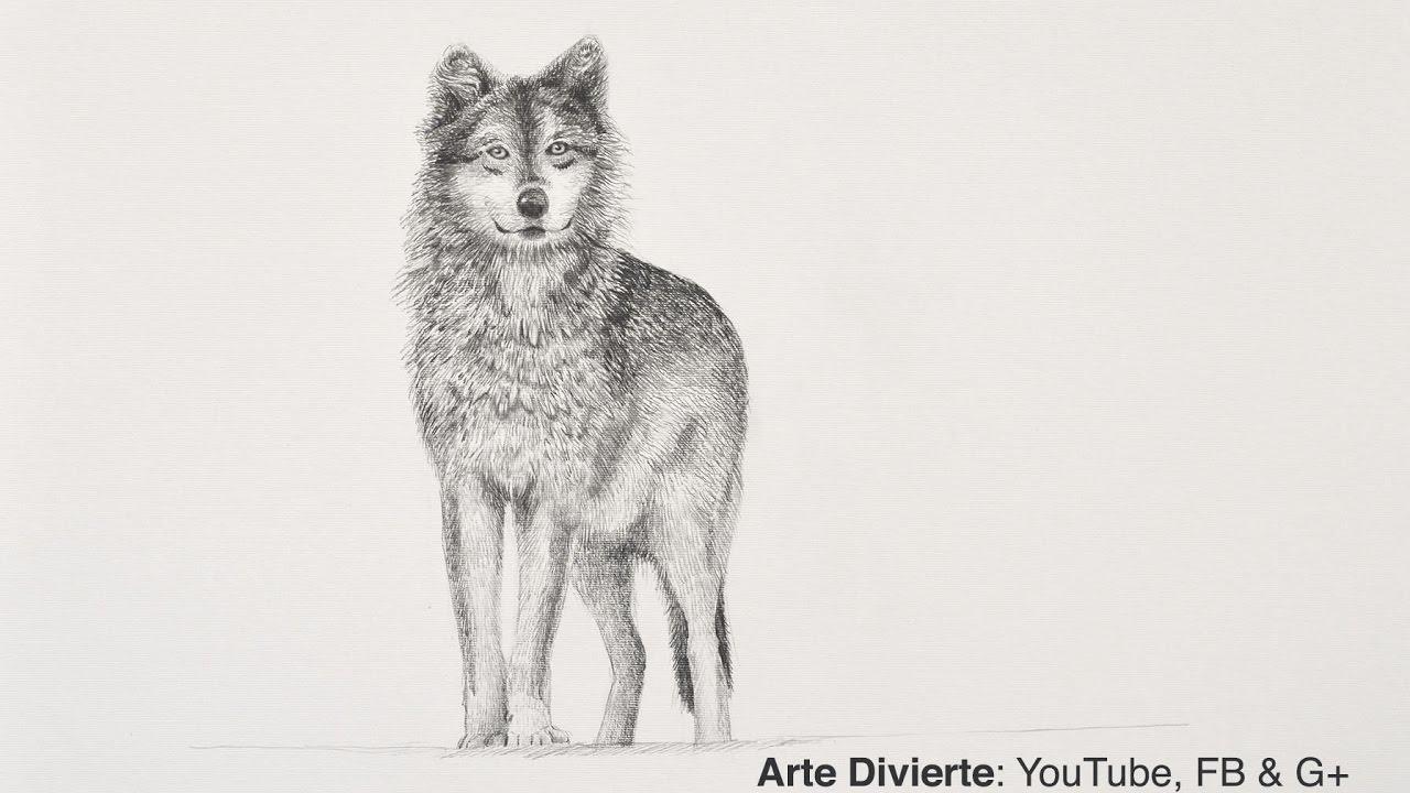 Cómo Dibujar Un Lobo A Lápiz Narrado Youtube