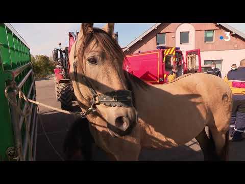 Formation sauveteur animalier : les pompiers au secours des animaux