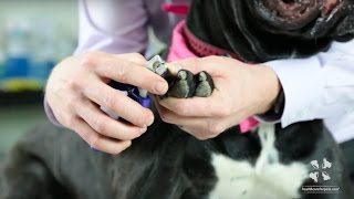 How to Safely Clip a Dog's Nails | Vet Tutorial