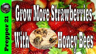 How To Grow Delicious Strawberries With Honey Bees