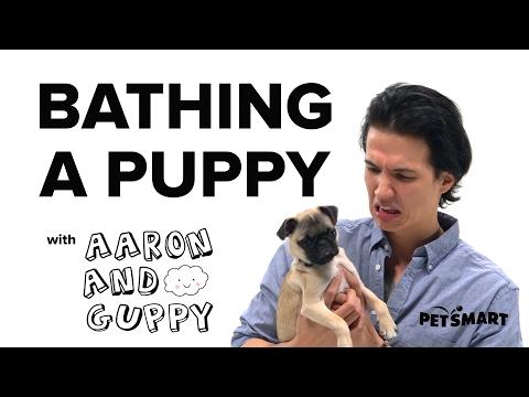 PetSmart Puppy Training: Bathing a Puppy