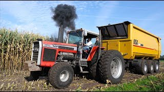 Spektakel bij van Bakel 2019 | End of the Maize Harvest Party | Massey Ferguson 2805 V8