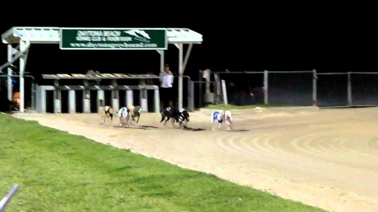 Daytona Dog Track >> Greyhounds Off And Racing At Daytona Beach Kennel Club Youtube