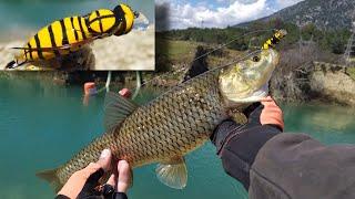 ARI İLE BALIK AVI  / LRF TAKIM İLE KASNA/AKBALIK AVI / FISHING WITH BEE  /CHUB FISHING WITH BEE