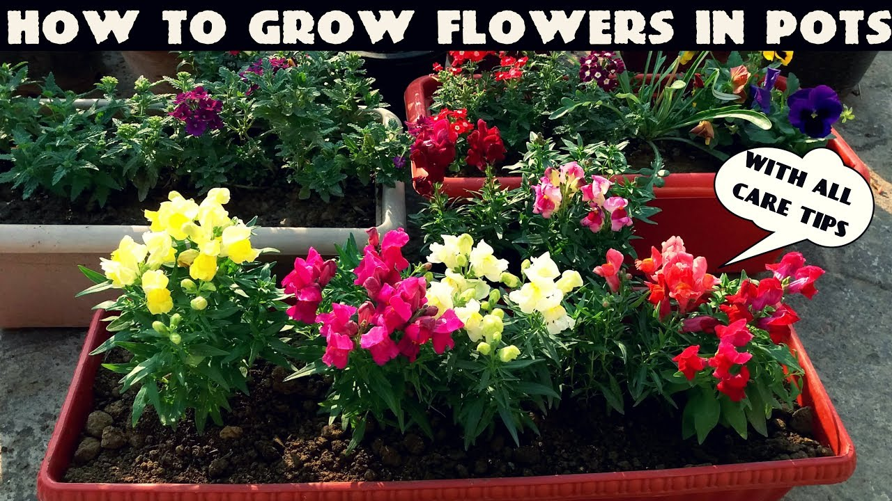 YouTube & How To Grow Flower Plants At Home