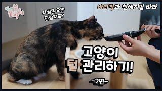 [전지적집사시점] 고양…