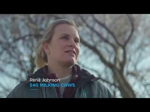 DeLaval Parlor Milking System P500   Parrallel Parlor Milking   DeLaval