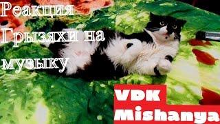 Кошка Пушинка младшая слушает музыку