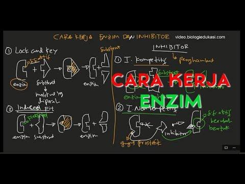 Inhibitor Kompetitif, Inhibitor Non Kompetitif, dan Cara Kerja Enzim