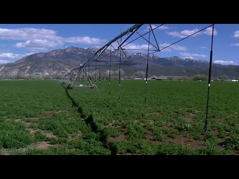 Utah farmers forced to slash crops as drought struggles set in