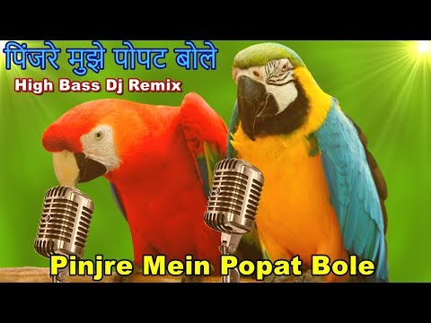 Pinjre Mein Popat Bole High Bass Dj Remix Song II Latest Dj Remix Song 2018