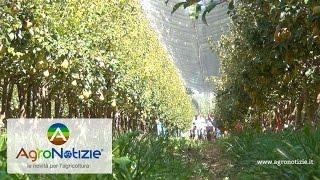 Progetto Pereto Sostenibile - Bayer Crop Science - Fondazione F.lli Navarra - Casalini