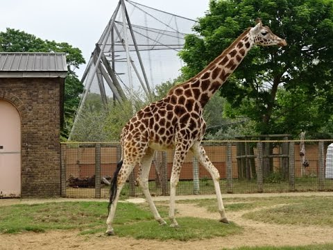 London Zoo, Regents Park, London, UK
