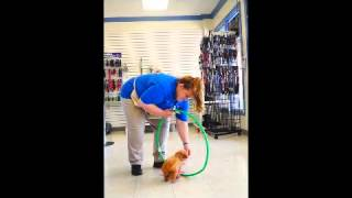 Teaching Your Dog To Jump Through A Hoop With Kennelwood Trainer Kim Hyde