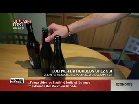 Cultive du houblon chez soi (Lille)