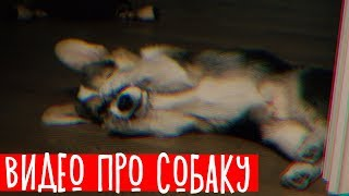 Download ВИДЕО ПРО СОБАКУ Mp3 and Videos