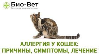 Аллергия у кошек: причины, симптомы, лечение