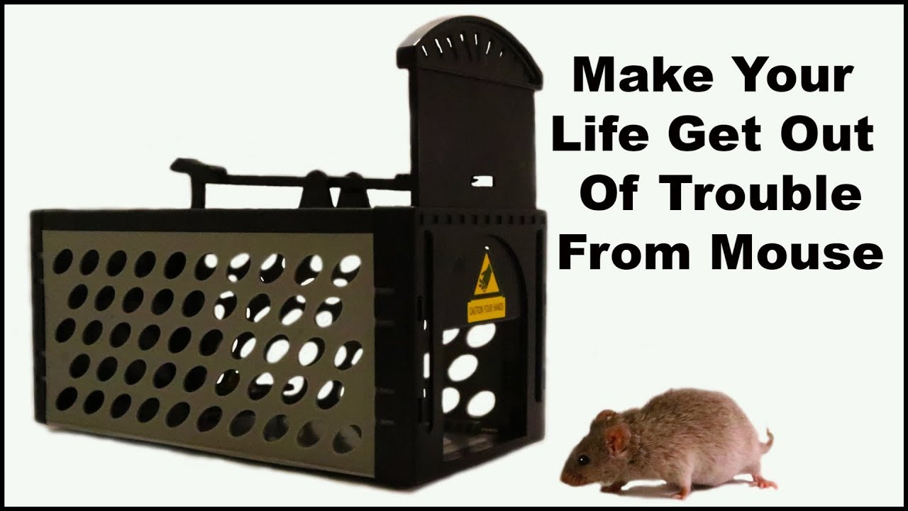 make-your-life-get-out-of-trouble-from-mouse-mousetrap-monday