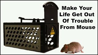 """""""Make Your Life Get Out Of Trouble From Mouse"""" Mousetrap Monday"""