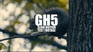 GH5 Slow Motion Test Footage [180fps]