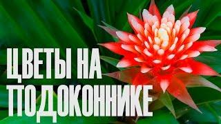 Комнатные цветы. Украшение подоконника.(, 2016-01-15T21:46:45.000Z)
