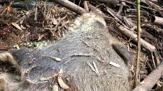 狩猟 #Pighunting #hoghunting #Hunting #caza #chasse #Jagd #caccia #...