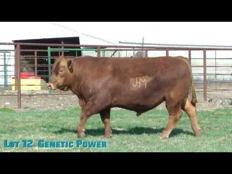 Lot 12  Genetic Power
