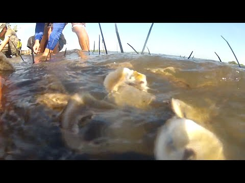 ONE Shorts: Shuck And Share