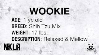 Meet Wookie A Shih Tzu Currently Available For Adoption At Petango.com! 3/19/2015 3:24:07 Pm