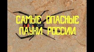 Самые ядовитые пауки России  Первая помощь при укусе паука