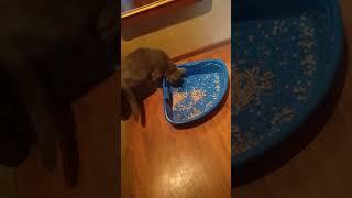 Туалет для кошек Триплекс (угловой)