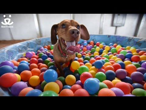 Drusilla the dog makes a splash at Best Friends Animal Society