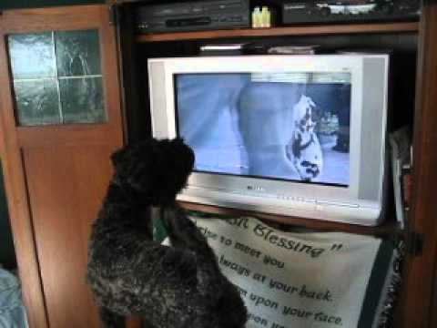 Murphy and TV