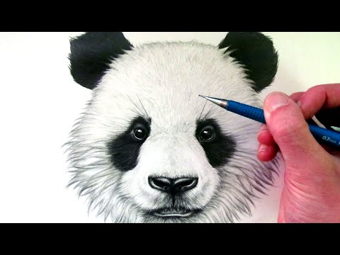 how-to-draw-a-panda-bear