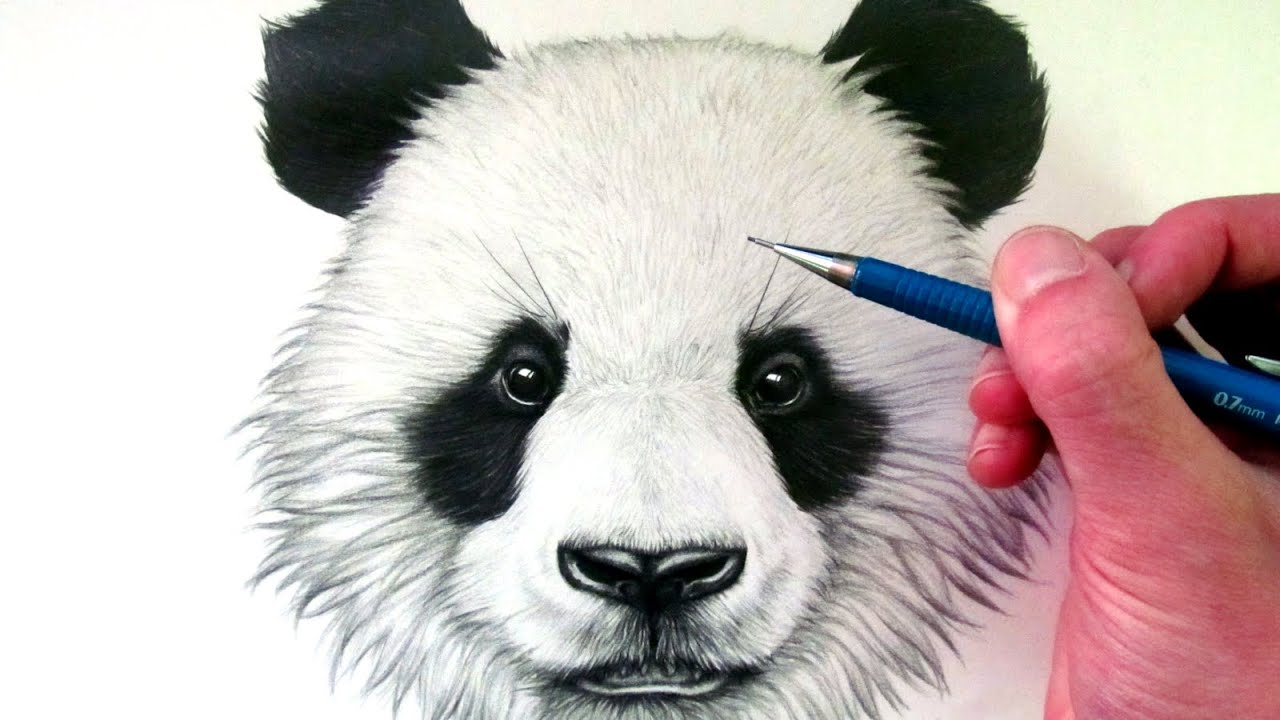 Uncategorized Drawings Of Panda Bears how to draw a panda bear youtube