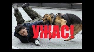 Нападение собак под Истрой  очевидец рассказал, как спасал пострадавшую женщину   Россия 24   YouTub