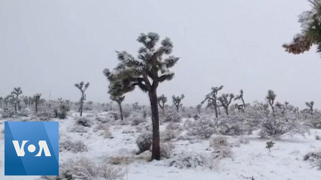 Snow Drapes California S Joshua Tree National Park