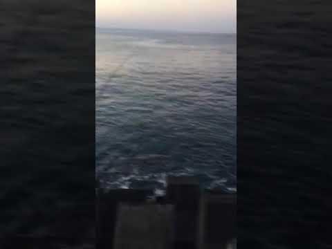 Shore jigging Bali yellowfin travelly