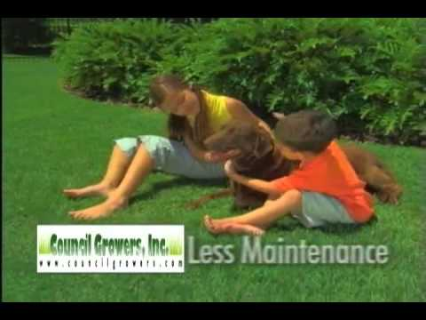 Empire Turf Zoysia Grass by Council Growers