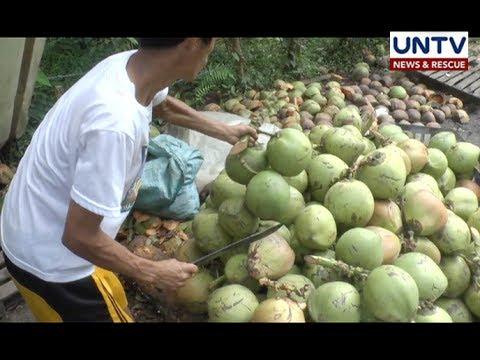 Coco levy fund issue, target resolbahin agad ng bagong PCA administrator