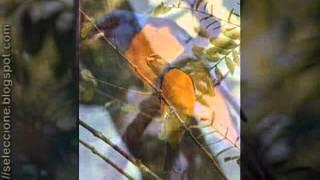 Pájaro chogui - Luis Alberto del Paraná y Los Paraguayos