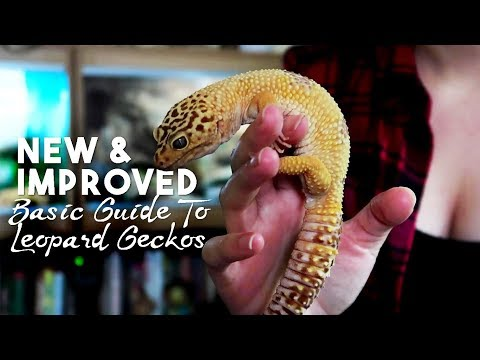 Basic Guide to Caring For & Handling Leopard Geckos!!