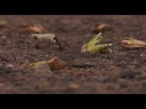 short film uttran  A film by Avatar group 8145224518