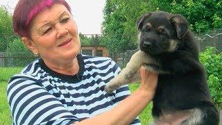 Восточно-европейских овчарок Тарасова воспитывает как детей